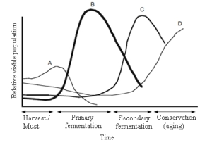 The composition of yeasts during fermentation of grape must.
