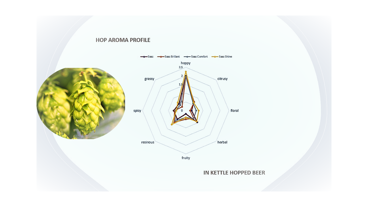 Hop aroma profile in kettle hopped beer