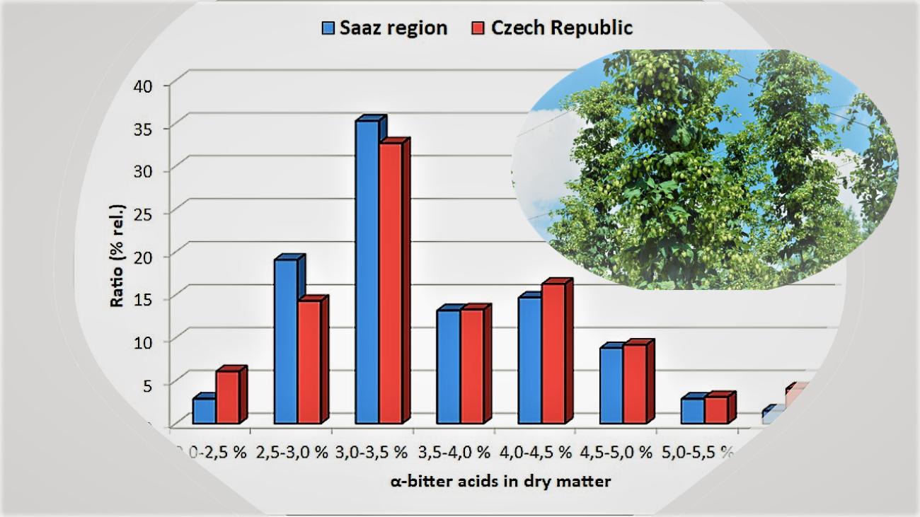 Distribution of alpha-bitter acid content of Saaz hops harvested in 2020